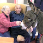 Immacolata House resident & loved one meeting Willow the donkey