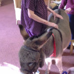 Immacolata House resident meeting Willow the donkey