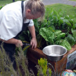 Chef cutting their home grown chard at Immacolata House Dementia Nursing Home Langport