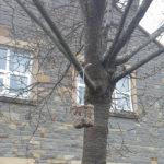 Bird feeder hanging in the tree