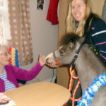 Aspen Court resident meeting Lofty the miniature horse from Lofty Therapy Horses