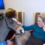 Aspen Court resident meeting Lofty the miniature horse